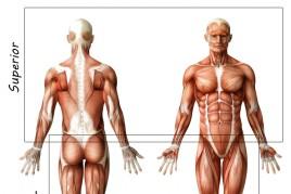 Treinamento de Noções Básicas de Anatomia